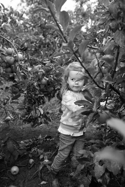 Apple Orchard-114