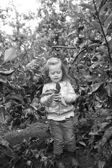 Apple Orchard-121