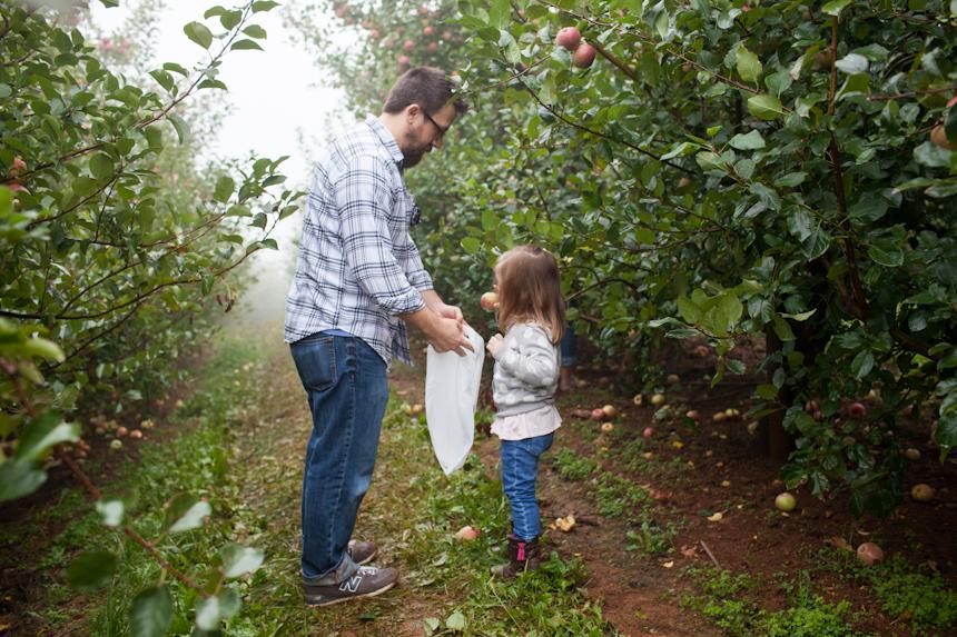Apple Orchard-3