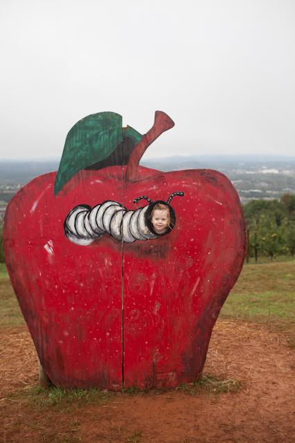 Apple Orchard-84